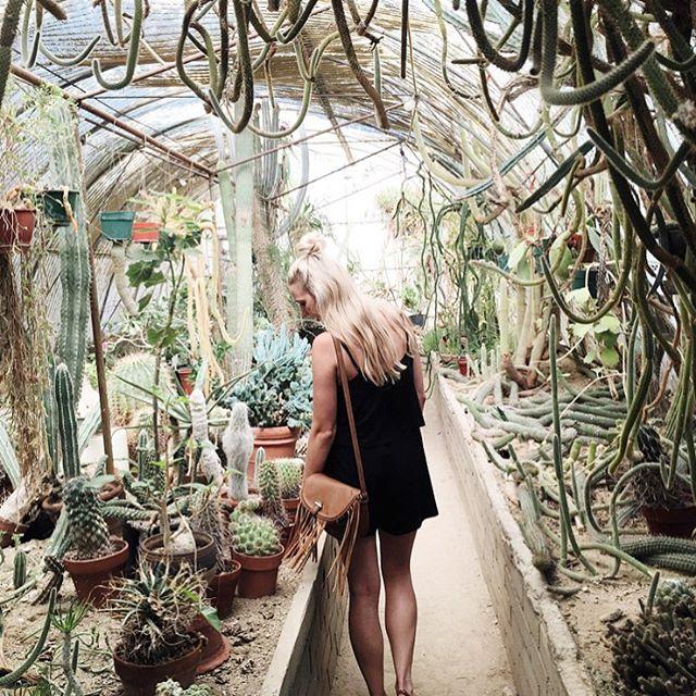 Throwback to designervaca and the most amazing cactarium takemeback tbt